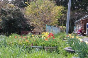 【定点観測】志津川小学校から(2012年5月~2016年4月)