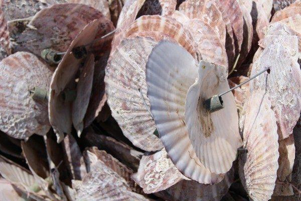 【募集】ASC認定!牡蠣の養殖準備おでって