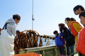 【団員限定先行募集】<br />極上!三陸ワカメ収穫体験2017