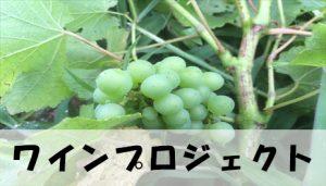 【受入休止中】ワインプロジェクト