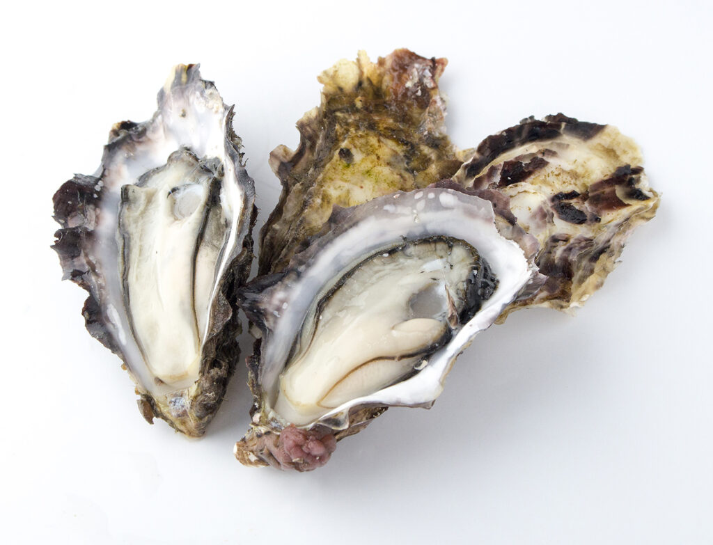 たった一度だけ味わえる極上の甘さ「あまころ牡蠣」販売中~